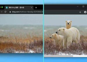 终于找到一款 Windows 下为截图边缘添加阴影工具了:ShareX