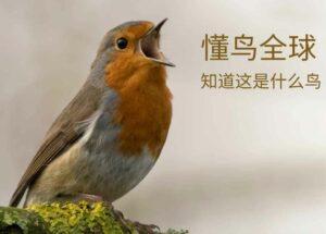 懂鸟全球 – 智能识别 10928 种鸟类名称[微信小程序/Web]
