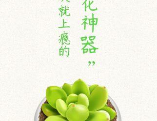 形色 - 对着花草拍照就能识别植物名[iPhone/Android] 3